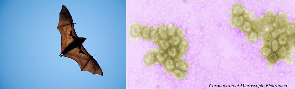 Coronavirus di interesse veterinario